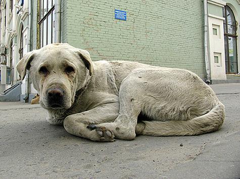 В Москве у Киевского вокзала произошло массовое убийство бездомных собак