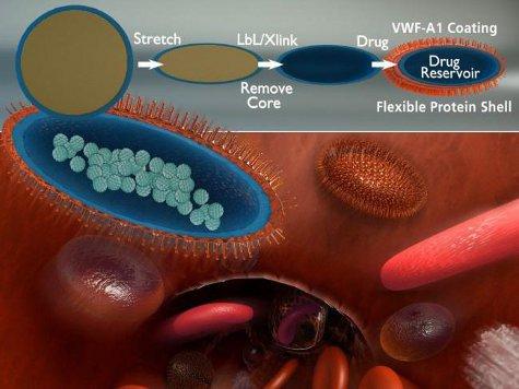 Искусственные тромбоциты можно использовать в качестве транспорта для доставки лекарств