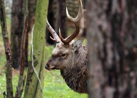 Новыми правилами добычи диких животных довольны только чиновники