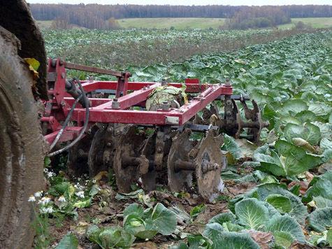 Почему треть России стала неприемлемой для сельского хозяйства?