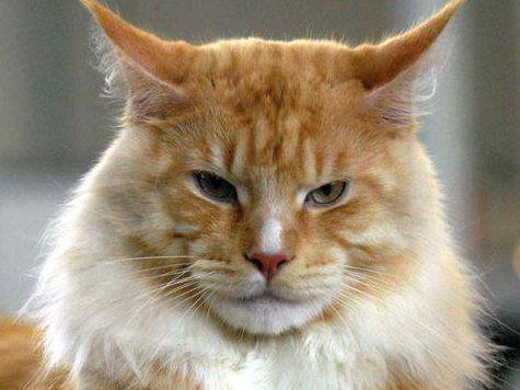 Суровый челябинский кот Жорик