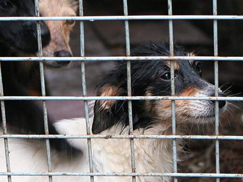 Что будет с собаками, если приют закроют?