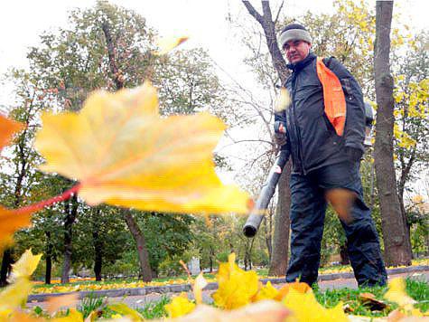 Москвичи борются против осенней уборки газонов