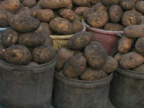 Картофель обогнал капусту пообвалу цен