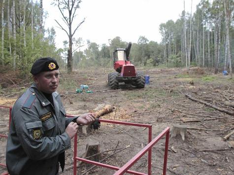 Дилемма  в химкинском лесу