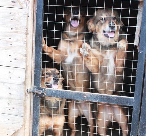 Московские бездомные собаки не поедут в Ярославль
