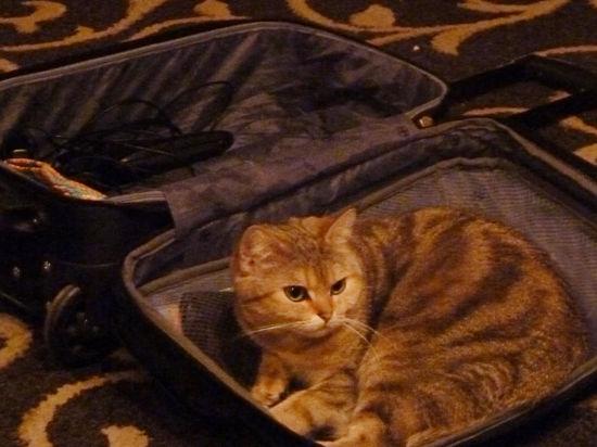 Как организовать путешествие с домашним животным: необходимы прививки, электронный чип и доплата за багаж