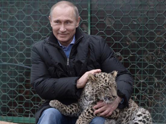 Путин, леопарды и олимпийский огонь: президент в Сочи стал «укротителем»