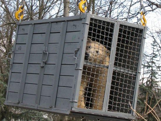 Украинскому зоопарку подарили московскую медведицу
