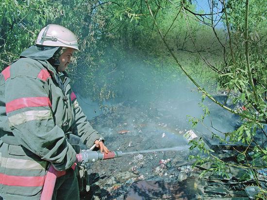 Московские деревья не будут гореть в огне