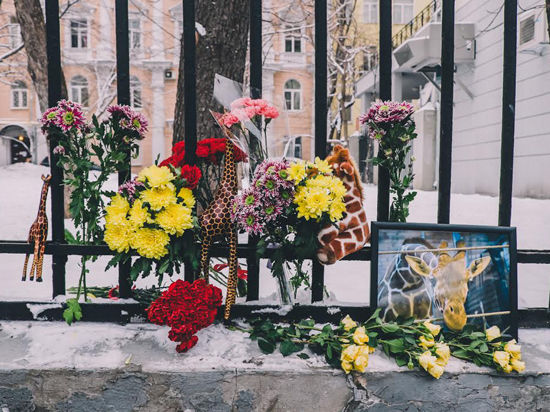 Митинг памяти жирафа Мариуса разгонять не стали