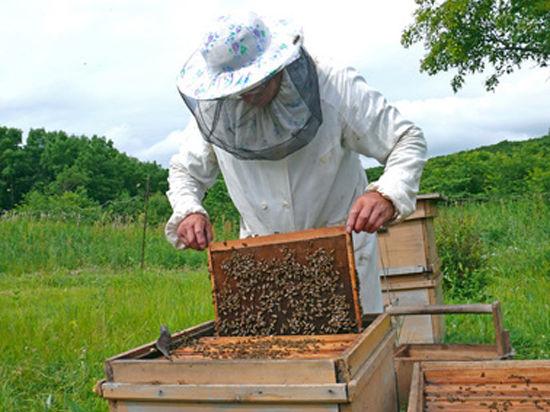 Пчеловоды в скором времени станут работать не по законам природы, а по требованиям госстандарта