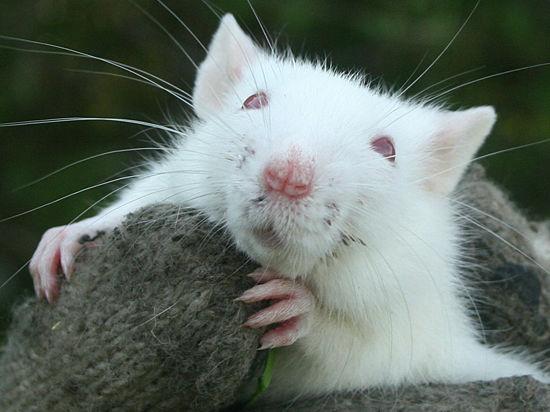Канализацию очистит мышь в облике растения