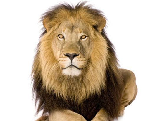 Представитель Copenhagen Zoo сообщил «МК», что трупы убитых животных используют для исследовательских проектов