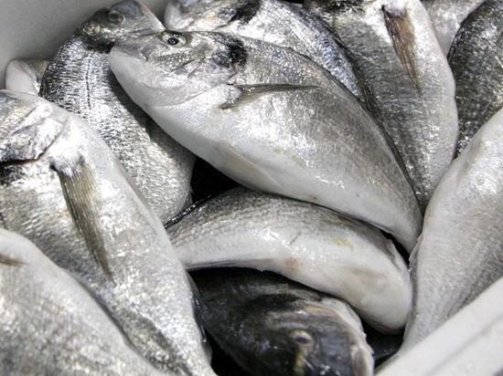 В Россию возвращается норвежская рыба