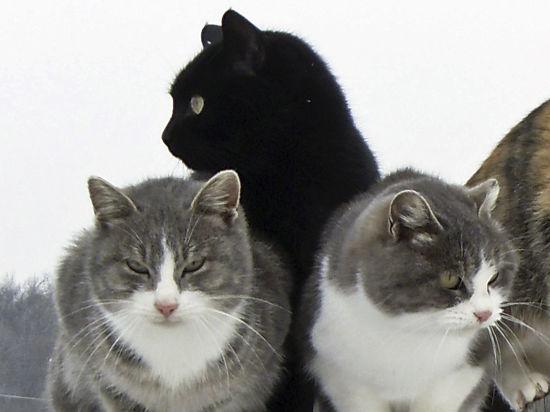 Зоозащитники ведут борьбу за освобождение московских котов