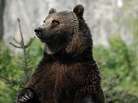 Правозащитники животных называют этот вопиющий случай «прилюдной казнью»