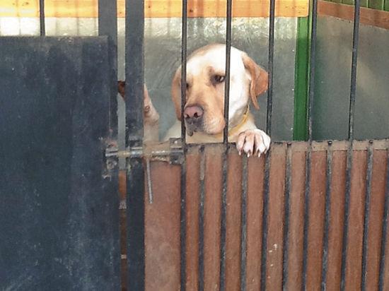 Безопасность на Олимпиаде обеспечат флегматичные собаки
