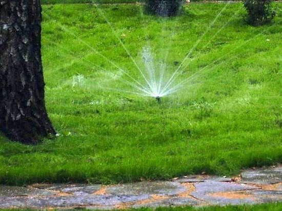 Капельное орошение полей: принцип действия, плюсы и минусы
