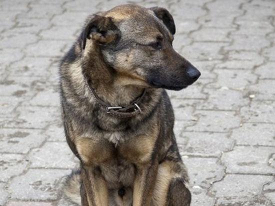 Поводом для для этого стала гибель местной знаменитости - бездомного пса по кличке Хатико