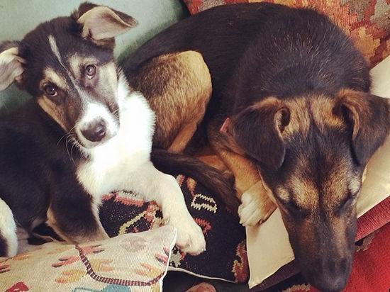 Призер Олимпиады-2014 отчитался о жизни «усыновленных» сочинских собак