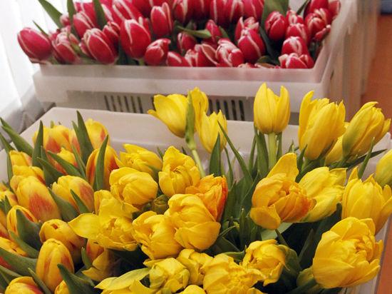 Весенний фестиваль цветов начнется на месяц раньше срока