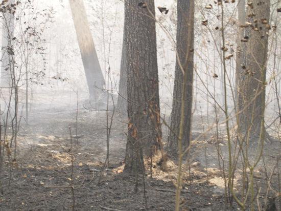 Подмосковные леса горели мало и быстро