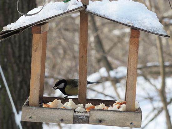 Пушкинцам расскажут о птичьем меню