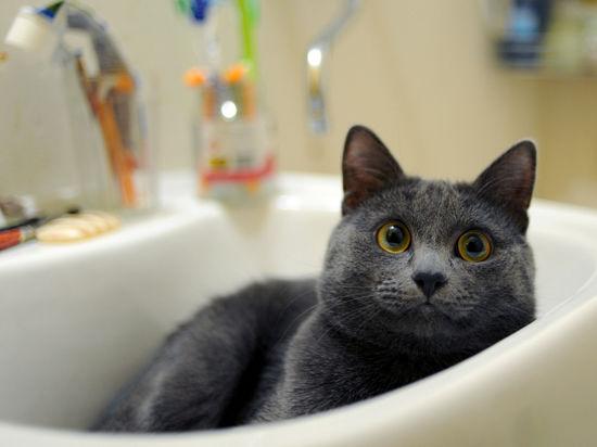 В Москве откроется выставка, на которой будут бесплатно раздавать кошек