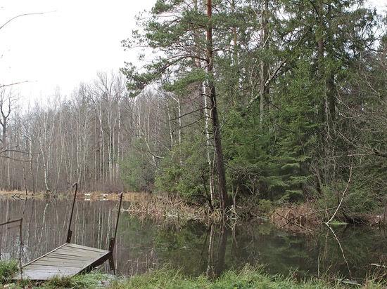 Кто подписал приговор сабуровскому лесу?