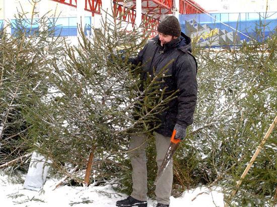 Нужную елку горожанам отмерит Дед Мороз