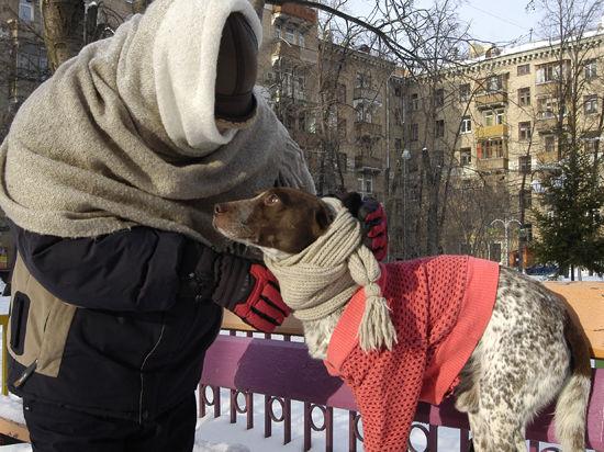 Мороз в Москве и фауна: «бродячек» лучше кормить, чем греть