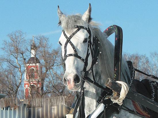 По коням за историей отечества