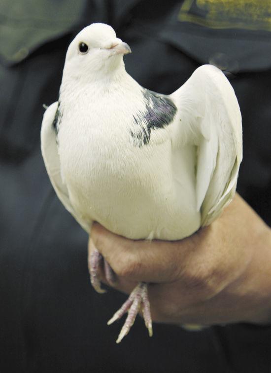 Выпущенные на Благовещение птицы, как правило, погибают