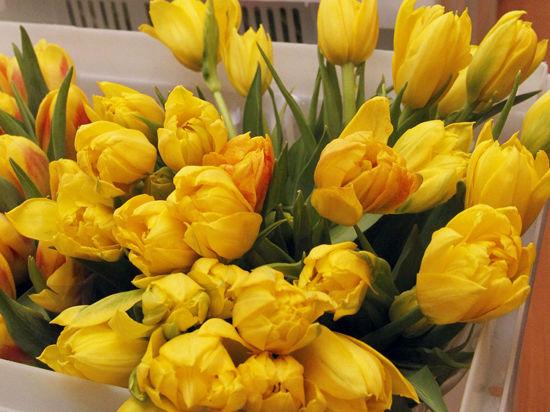 К 8 марта тюльпаны притворятся лилиями