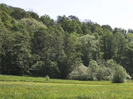 СКР помог сохранить сиверский лес