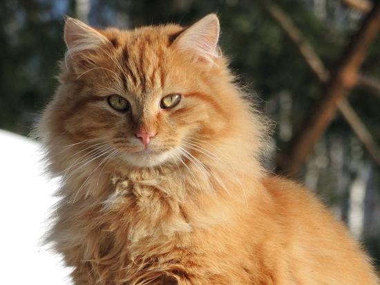 Заразней кошки зверя нет?