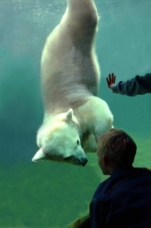 Как животные в зоопарке изучают посетителей