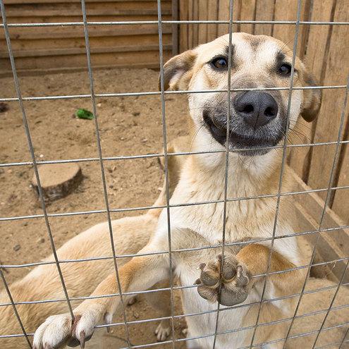 Бродячие собаки останутся в Москве