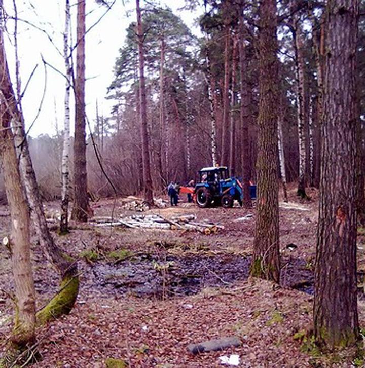 В Красногорске вырубили 3 гектара лесопарка в центре города