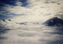 Ученые нашли в Антарктиде окаменелые останки леса