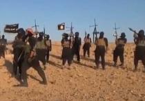 Пентагон изучает возможность попадания американского оружия в руки «Исламского государства» в Сирии