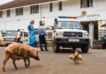 Вирус Эбола: в Африке начинается миссия ООН стоимостью в 1 млрд долларов