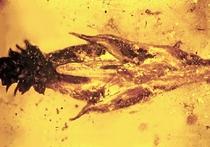 Динозавры могли питаться галлюциногенными грибами
