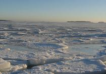 Исследователи впервые засняли на видео подлёдную жизнь Антарктиды