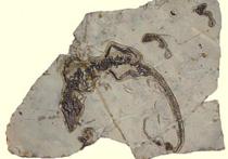 Рептилии Юрского периода были отменными родителями