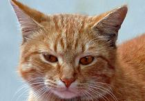 За то, что скушал кот, заплатит аэропорт