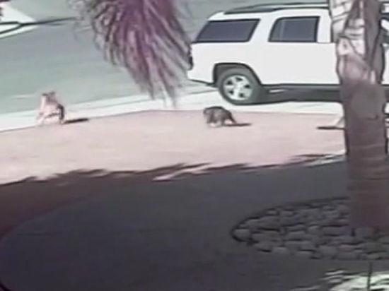 Кошка-герой, спасшая ребенка от собаки, посетила бейсбольный матч и получила свою порцию аплодисментов