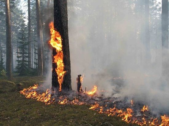 В Омскую область пришла жара. В выходные дни омские пожарные тушили до 40 лесных пожаров в сутки. 15 мая температура воздуха может повыситься до + 30 градусов.