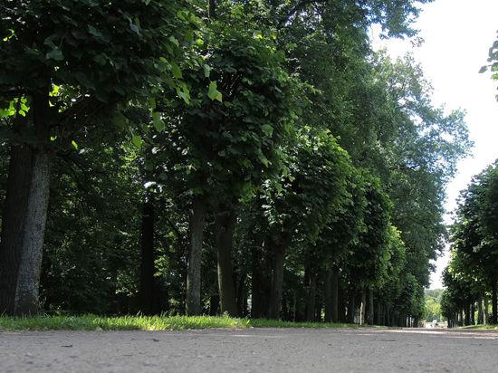 Десятки живых деревьев в Новой Москве приговорили к уничтожению